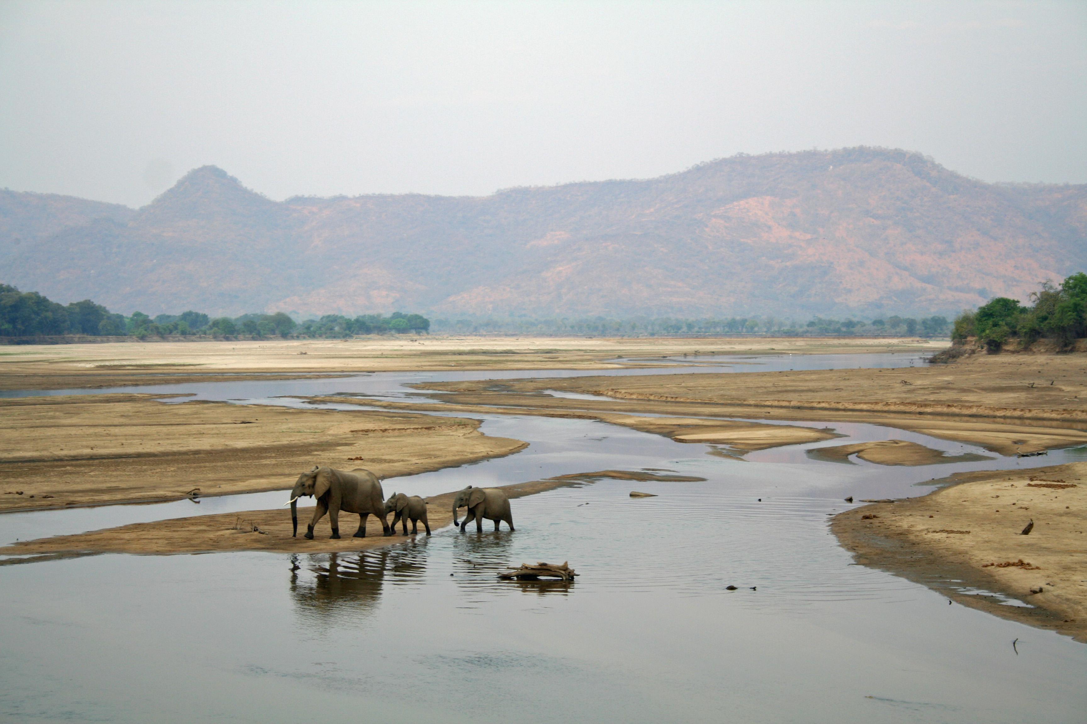 Africa Elephants