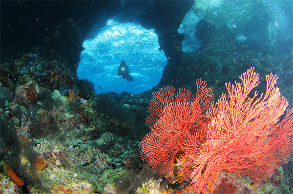 10 Cross Wreck, Raja Ampat