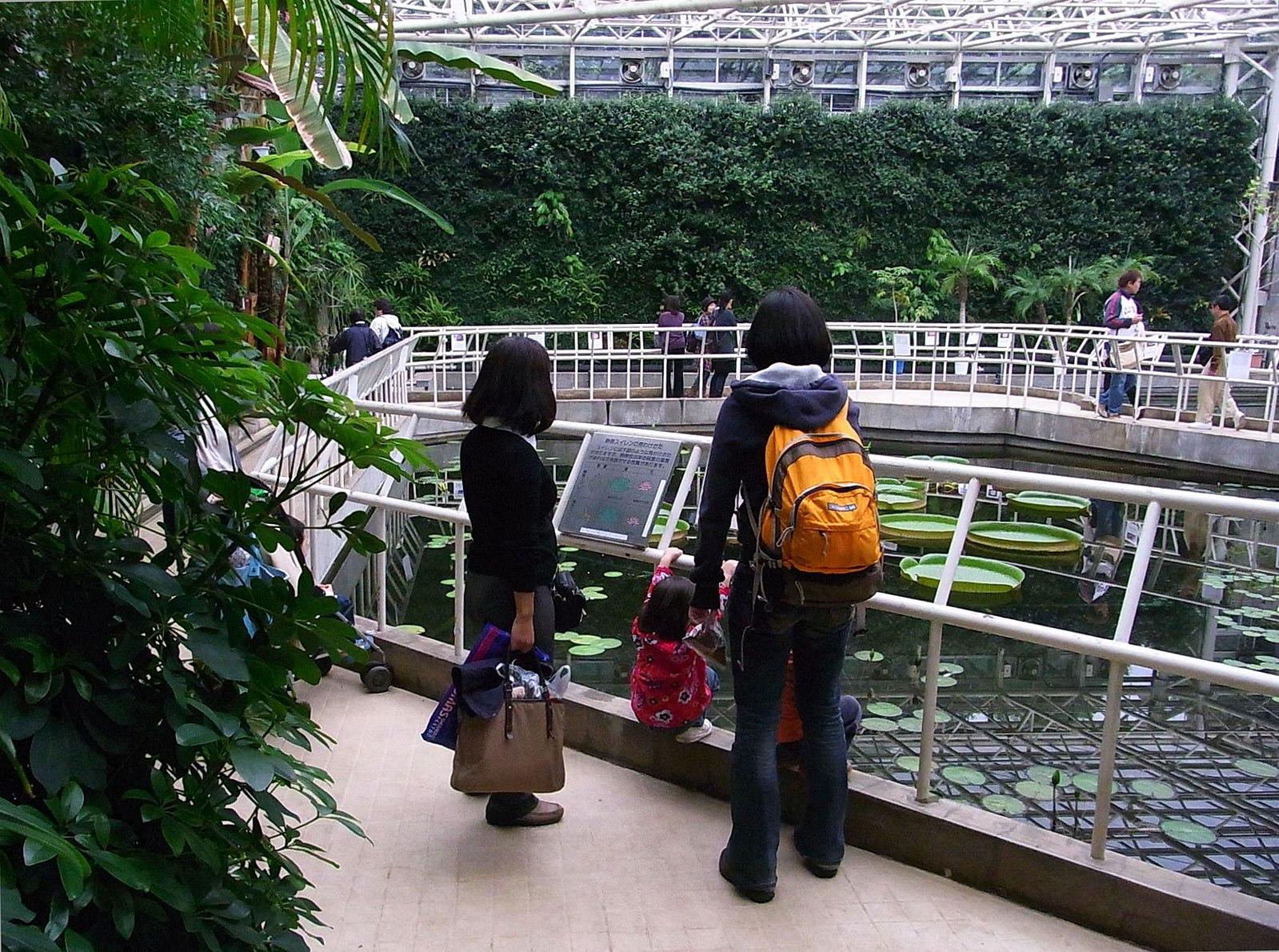 Jindai Botanical Garden Mitaka Travel Guide: A Quick Trip From Tokyo