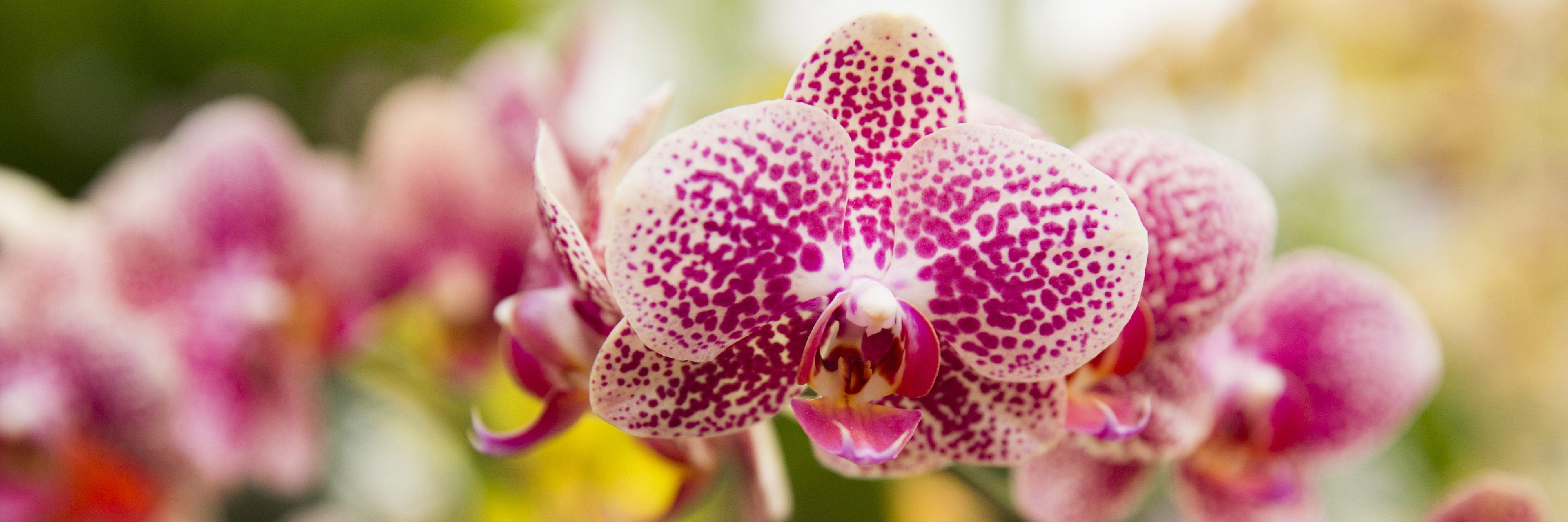 11 Best Things To Do in NYC in February Orchid Show