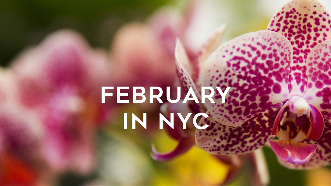February in NYC